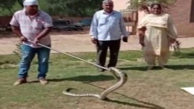 Haryana: 8-Foot Long Python Found in Car in Hisar's Auto Market, Rescued by Forest Department (Watch Video)