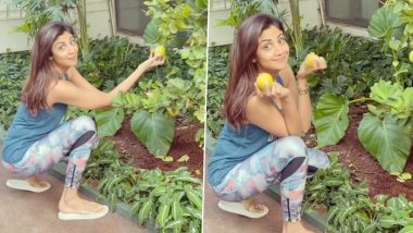 Shilpa Shetty Shares 'Food for Thought' as She Picks out Lemons From Kitchen Garden (Watch Video)