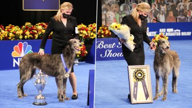 National Dog Show 2020 Pics & Videos: Claire, the Scottish Deerhound Declared Winner, Annual Event With Adorable Canines Walking the Ramp Is a Hit on Thanksgiving Day