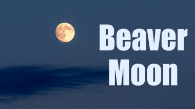 Beaver Moon 2020 Date: All You Need to Know About The Full Moon of November That Forms a Penumbral Lunar Eclipse