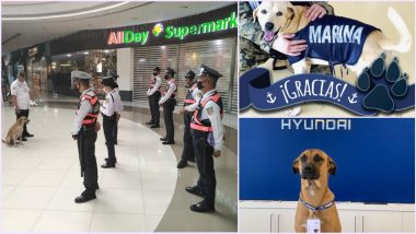 Cute Pawfessionals! Viral Stray Dog Lazing in Philippines Mall Gets Hired in Security; Other Times When Pooches Secured Jobs Just by Their Presence (View Adorable Pics)