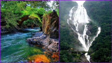 Mollem National Park in Goa: From Dudhsagar Waterfalls to Rich Biodiversity, Know Why Bhagwan Mahaveer Sanctuary is Beautiful Nature's Bounty