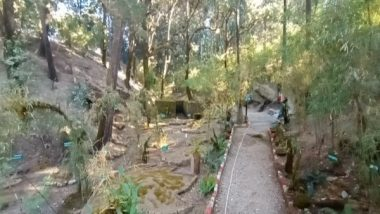 India Gets Its First-Ever Moss Garden in Uttarakhand's Nainital District