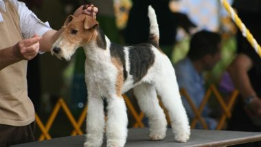 National Dog Show 2020 Live Streaming Online Details: Know Date, Time & All About the Much Loved Event With Canines Aired on Thanksgiving Day