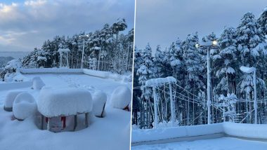 Jammu and Kashmir Turns Into Winter Wonderland! Pictures and Videos of Fresh Snowfall in Patnitop Take Over Social Media As Travellers Enjoy the White Paradise