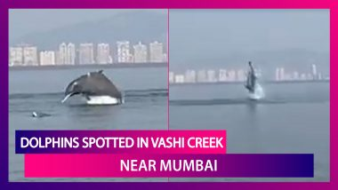 Dolphins Spotted In Vashi Creek Near Mumbai, Rare Sight Of The Mammals Is Going Viral!