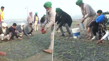 Farmers' Agitation Against Farm Laws: Protesting Farmers Grow Crops on Nirankari Samagam Ground  in Burari (View Pics)