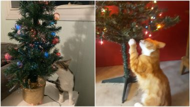 Christmas Tree Cat-tacked! People Share Funny Pics and Videos of Their Pet Cats Attacking Decorated Xmas Trees Ahead of Christmas 2020