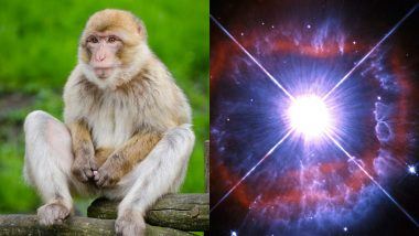 Year-Ender 2020: From Monkey Stealing COVID Samples to a Star Going Missing, 9 Craziest Things That Happened This Year