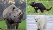World Wildlife Conservation Day 2020: From Javan Rhinos, Polar Bears to Tasmanian Devil, Know About 7 of The Most Endangered Animal Species in The World