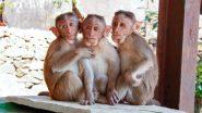 Karnataka Monkey Killings: 7 Arrested For Allegedly Killing 38 Monkeys in Hassan District