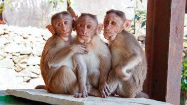 7 Arrested For Allegedly Killing 38 Monkeys in Karnataka's Hassan District