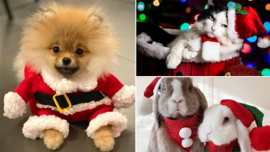Santa Paws Are Ready For Christmas 2020! Dogs, Cats and Bunnies Dressed in Santa Claus Costume Are Awwdorable Addition to People's Xmas Celebrations (See Cute Pics)