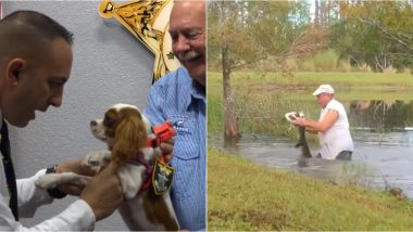 Puppy Rescued From Jaws of Alligator Honoured As 'Deputy Dog' by Florida Sheriff (See Pictures and Videos)