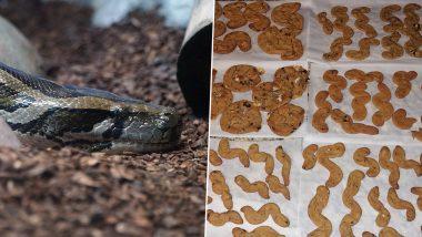 'Hiss-Mas' Christmas Cookies! Florida Python Hunter Bakes Xmas Treats Using Invasive Everglades' Species Eggs! (See Pics)
