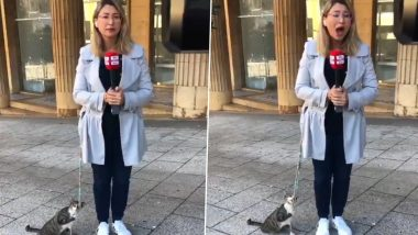 Cat on Camera! Sky News Arabia Reporter Larissa Auna Joined by Adorable Kitten While Reporting, Watch Video of Her 'Most Loyal Follower'
