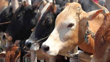 Punjab: 13 Animals Die after Roof of Dairy Farm Collapses in Ludhiana