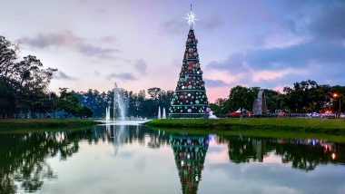 Christmas Tree Dream Explained: Know the Meaning And Interpretation of Seeing the Festival Related Dream