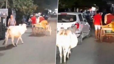 Mother Cow in Odisha's Malkangiri Rushes Behind Trolley Rickshaw Taking Calf to Veterinary Hospital (Watch Video)