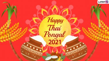 Happy Pongal 2021 Quotes & HD Images: Send WhatsApp Stickers, Thai Pongal Greetings, GIFs, Telegram Messages & Pics to Wish 'Iniya Pongal Valthukkal' for Tamil Nadu's Harvest Festival