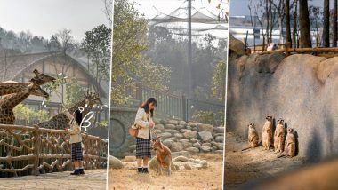 COVID-19 Epicentre Wuhan Invites People to Visit Wildlife Kingdom in The City After China Emerged To Have Recovered From Coronavirus