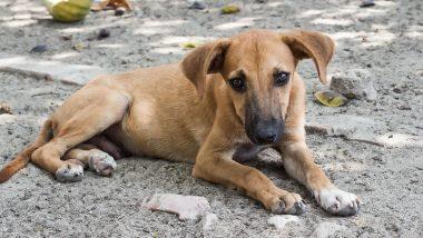 Ludhiana Shocker: Boy Hides Dog Bite From Parents, Dies of Rabies