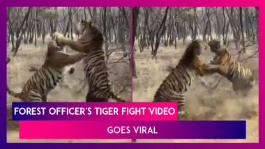 Video Of Two Tigers Fighting Shared By A Forest Officer Goes Viral, He Says, 'Clash Of Titans. Only From India'