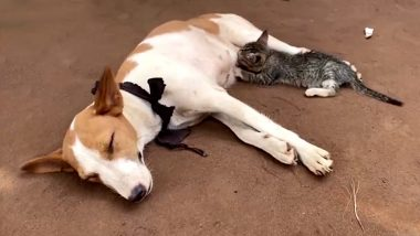 Purr-Fect Sight! Kitten Feeds on Dog's Milk, Adorably Presses Its Paws for More, Viral Video From Nigeria Will Take Your Monday Blues Away