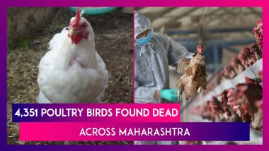 Bird Flu Toll In Maharashtra: 4,351 Poultry Birds Found Dead Across The State, Highest Number Since January 8