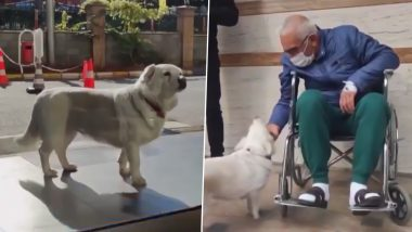 Pups' Loyalty! Dog Waits For Owner Outside Turkish Hospital for Days Before Finally Being Reunited With Joy, Other Times When Pooches' Love Towards Their 'Hoomans' Made Us Teary-Eyed! (Watch Videos)
