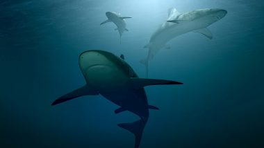 Overfishing Threatens Marine Life! Over 70% of Shark and Ray Populations Declined in the Past 50 Years, Scientists Blame Humans