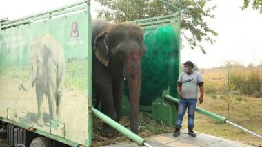 Elephant 'Emma' Fed Alcohol Forcefully by Owners To Keep Her Under Control for Begging, Gets Rescued