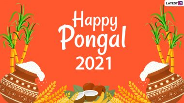 Pongal 2021 Date and Significance: Know About The Celebrations of Bhogi, Surya, Mattu and Kanum Pongal Harvest Festival