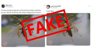 Busty Bee Busted! Viral Pic of Asian Magumbo Hornet, Big-Boob Insect Invading North America is Fake, Here's The Truth