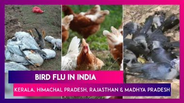 Bird Flu Scare In India: What Is The H5N8 Virus, Symptoms & Which States Affected?