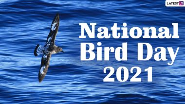 National Bird Day 2021: Did You Know Albatrosses Can Sleep While Flying at 25 Mph? Know 17 Crazy Facts About Birds