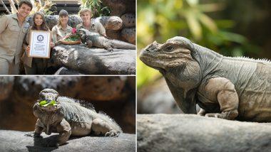 World's Oldest Rhinoceros Iguana: Rhino, 40-Year-Old Iguana in Australia Zoo Makes Guinness World Record, See Pics of Lizard Celebrating The Honour!