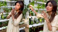 Shilpa Shetty Kundra Offers Fans a Glimpse of Her Hydroponic Farm (Watch Video)