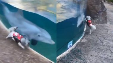 Cute Dog and Dolphin Zoomies Will Make You Say Awww, Watch Adorable Video of Unlikely Friendship Going Viral