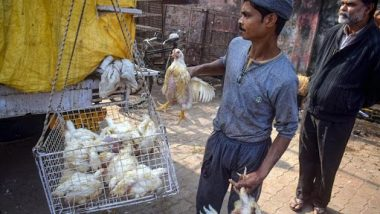 Bird Flu Outbreak in India: Avian Influenza Reported in 13 States, Compensation Paid to Farmers Whose Poultry Birds Are Culled