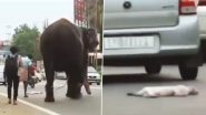 'Elephant in Chains…Still More Humane!' Jumbo Stops on Its Way Seeing a Dog's Dead Body, While Humans & Vehicles Run Unbothered, Watch Viral Video
