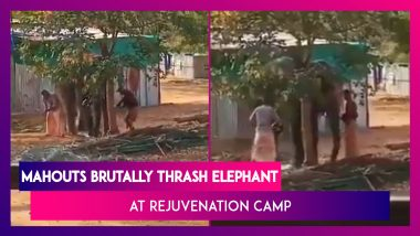 Shocking Animal Cruelty Caught On Camera: Mahouts Brutally Thrash Elephant At Rejuvenation Camp, Arrested