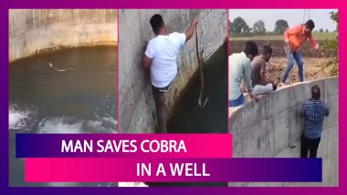 Man Saves Cobra In A Well, Viral Video Clip Leaves Netizens Shocked