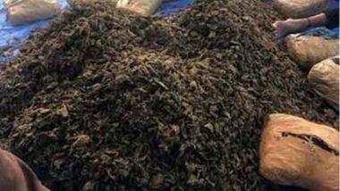 Maharashtra: Farmer Seeks Permission to Cultivate Ganja on His Farm