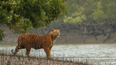 Wildlife Conservation Initiatives Report Presented by India: UN Body