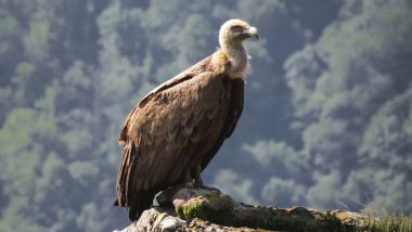 Bangladesh Becomes First Country To Ban All Known Vulture-Toxic Drugs
