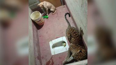 Karnataka: Dog Survives Six Hours in Toilet with Leopard in Dakshina Kannada District (Watch Video)