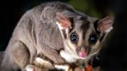 Buruli Ulcer in Australia: What Is Flesh-Eating Disease? How Is It Spread? Is It Linked to Possum? Here's Everything to Know About the Infection