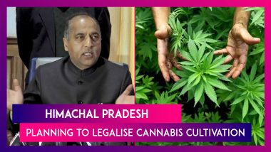 Himachal Pradesh Planning To Legalise Cannabis Cultivation, Everything You Need To Know
