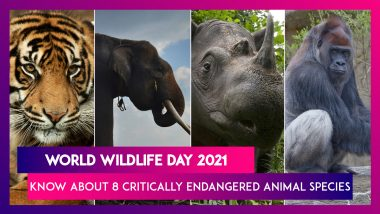 World Wildlife Day 2021: 8 Critically Endangered Animal Species You Should Know About